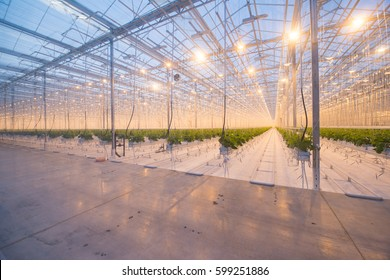 Organic hydroponic vegetable cultivation farm. Modern big greenhouse