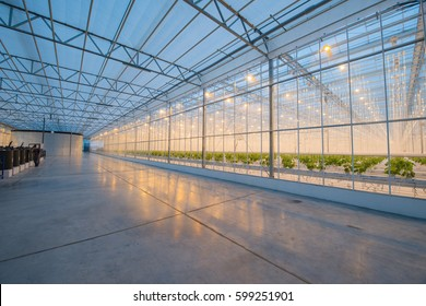 Organic hydroponic vegetable cultivation farm. Modern big greenhouse