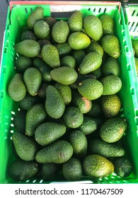 Organic imperfect spray free avocados for sale at a farmers and growers market in New Zealand, NZ in a plastic crate