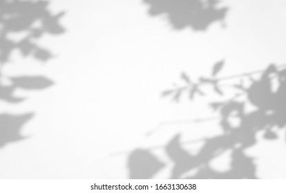 Organic Leaves natural shadow overlay effect on white texture background, for overlay on product presentation, backdrop and mockup