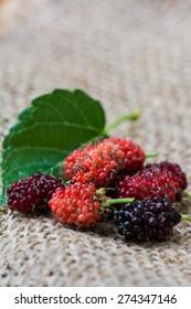 organic mulberry