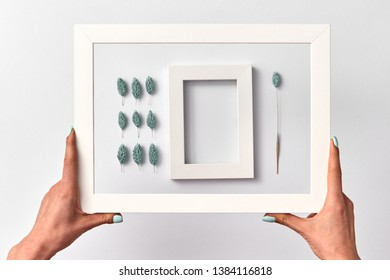 Organic natural composition with herbal buds of turquoise color and empty frame for text in a girl's hands on a light background. Place for text.