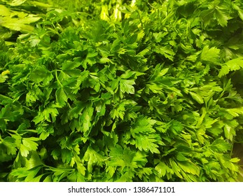Organic Parsley and Lovage Herb in the Local Market Place, Green Fresh Flavored Harvested Leaves Texture, Raw Italian Parsley Background