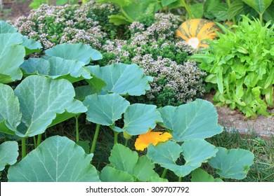 Organic permaculture  garden
