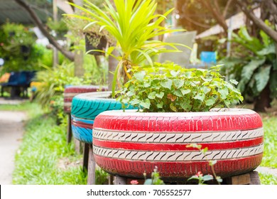 the organic plants were growth in the recycle painted tires in the garden