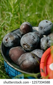 Organic plums in blue pot on the grass
