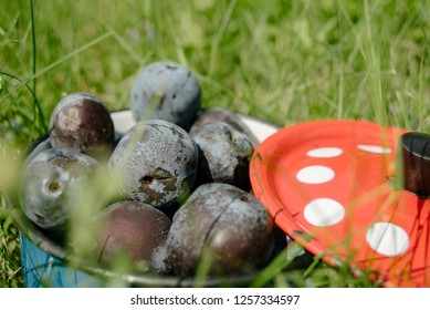 Organic plums in blue pot with a red cover on the grass