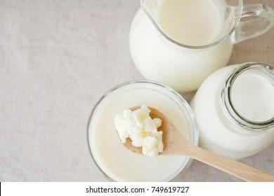 Organic probiotic milk kefir grains, Tibetan mushrooms on wooden spoon and kefir milk in glass containers, gut health