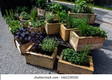 Organic produce sold at farmer's market. A high angle view of rustic wooden planters filled with a variety of fresh herbs and edible plants displayed at an open air agricultural fair for local farmers