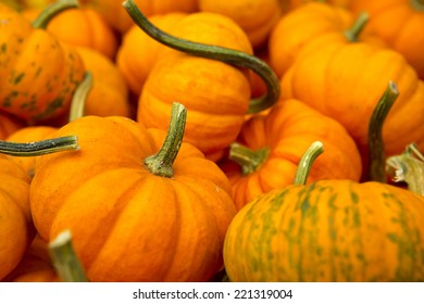 Organic Punpkins from a local market
