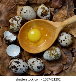 Organic quail eggs. Quail eggs easter. Quail eggs and yolk in a wooden spoon on a background of a wooden surface, selective focus. Top view.
