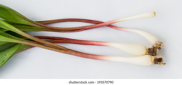 organic ramps or wild leeks on a white background