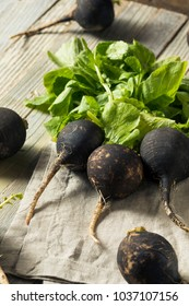 Organic Raw Black Radishes in a Bunch