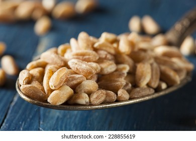 Organic Raw Farro Grain in a Bowl