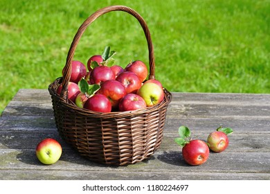 Organic red apples in a basket on the old table