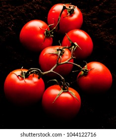 Organic ripe tomatoes on black soil before being packed