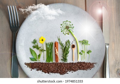 Organic salad and herb garden on a plate, with dandelion made from parsley, chives and pumpkin seeds