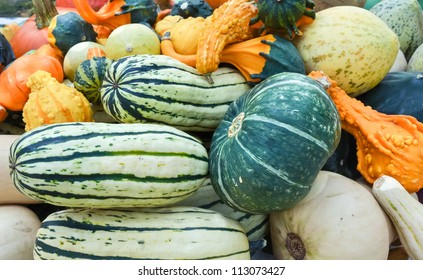 Organic Squash and gourds at farmers market
