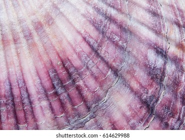 organic texture, sea shell closeup
