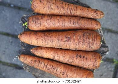 Organic unwashed carrots. Grey stone background. Daylight
