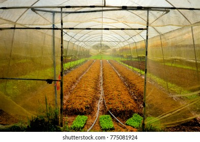 Organic vegetable greenhouse. In the greenhouse are prepared planting seedling.