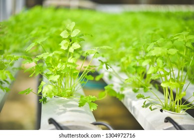 Organic vegetable seedlings Plots of organic vegetables on the farm Growing vegetables without soil