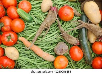organic vegetable selection with carot, green beans, potatos, tomatoe