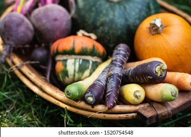 Organic vegetables, colorful carots, red beets, pumpkin, gourd, squash in a basket, selected focus, toned image