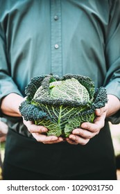 Organic vegetables. Farmers hands with freshly harvested vegetables. Fresh organic kale.