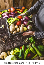 Organic vegetables. Farmers hands with freshly harvested vegetables. Fresh organic zucchini.