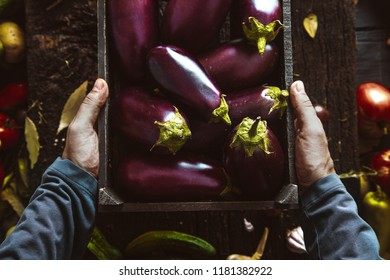 Organic vegetables. Farmers Hands with Freshly Harvested Vegetables. Fresh Organic Egg Plant.