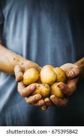 Organic vegetables. Farmers hands with freshly harvested vegetables.