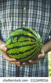Organic vegetables and fruit. Farmers hands with freshly harvested vegetables. Fresh organic watermelon.