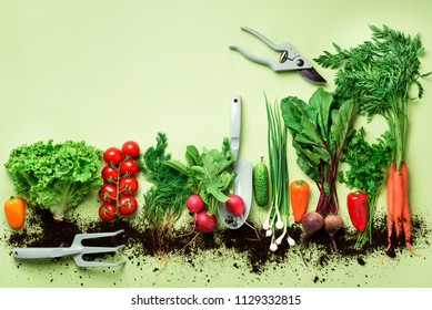 Organic vegetables and garden tools on green background with copy space. Top view of carrot, beet, pepper, radish, dill, parsley, tomato, lettuce. Veggies growing in soil. Vegan, eco concept.