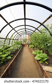 Organic vegetables in greenhouse interior