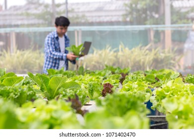 Organic vegetables are grown inside a farm. An organic green leafy vegetables are suitable for those who love health. Nowadays, there are widespread organic farming.