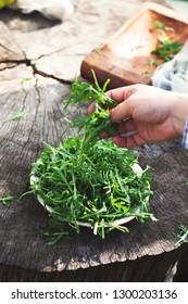 Organic vegetables. Healthy food. Rocket salad in farmers hands