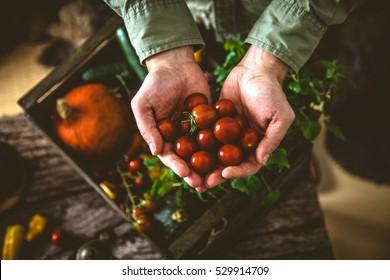 Organic vegetables on wood. Farmer holding harvested vegetables. Rustic setting