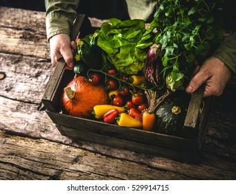 Bio-Gemüse auf Holz. Bauer, der Gemüse geerntet hat. Rustikale Einstellung