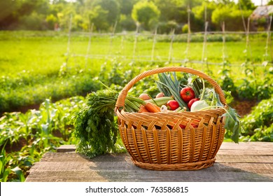 Organic vegetables in wicker basket on the table