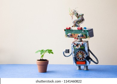 Organic versus artificial inorganic concept. Robot examines a living plant in a clay flower pot. Beige wall blue floor background, copy space.