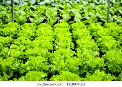 organic vertical farming