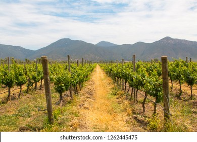 Organic vineyards with mountains on the background