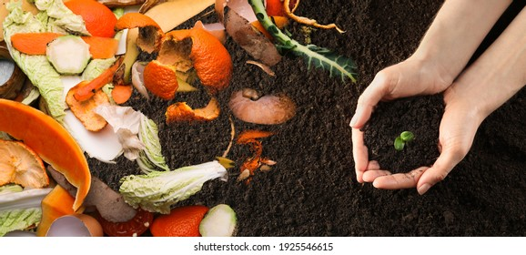 Organic waste for composting on soil and woman holding green seedling, top view. Natural fertilizer