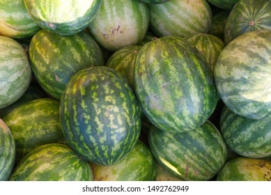 Organic watermelons freshly picked are stacked inside a box