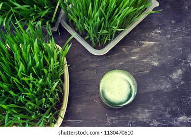 Organic wheat grass juice beside a wheat grass plant