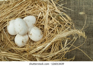 Organic white eggs from domestic farm. Eggs in a straw nest