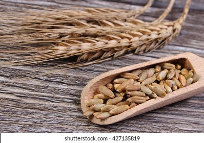 Organic whole rye grain with spoon and ears of rye lying on wooden background