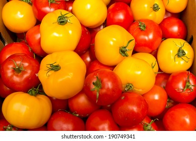 Organic Yellow and Red Tomatoes
