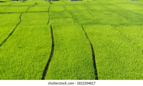 Organized paddy fields in the plains - Shutterstock ID 1822204817